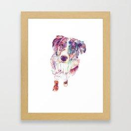 Multicolored Australian Shepherd red merle herding dog Framed Art Print