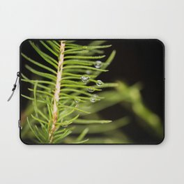 Spruce branch with drops Laptop Sleeve