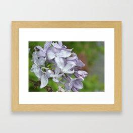 Springing into Spring Framed Art Print