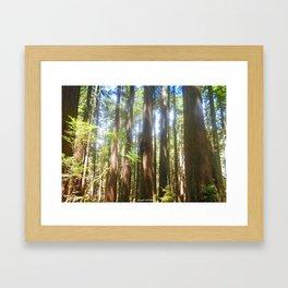 Forest Life Framed Art Print