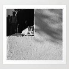 Greek Cat Art Print