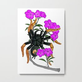 KOCHIANA BRUNNIPES Metal Print