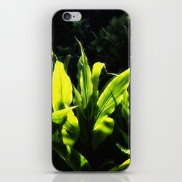 Ginger leaves in the Sun wet with rain iPhone Skin