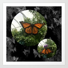 Orange Butterfiles Art Print
