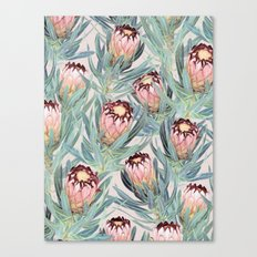 Pale Painted Protea Neriifolia Canvas Print