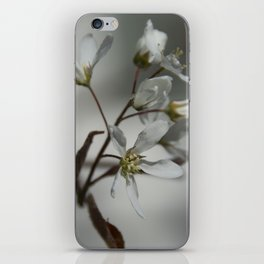 The fragile start of spring iPhone Skin
