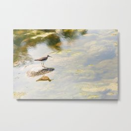Common Snipe 1 Metal Print