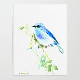 Mountain Bluebird homde decor Poster
