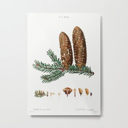 Silver fir (Abies pectinata) from Traité des Arbres et Arbustes que l'on cultive en France en pleine Metal Print