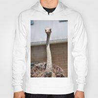 ostrich Hoodies featuring Ostrich :) by IowaShots