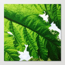Torn Large Leaf Green Leaf Canvas Print