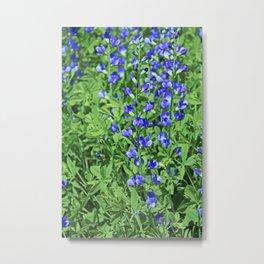 Blue False Indigo- vertical Metal Print
