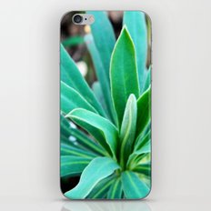 Bush iPhone & iPod Skin