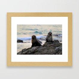 Seal Pair, Kaikoura Framed Art Print