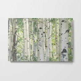 Aspen Grove Metal Print