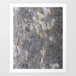 brown sycamore bark Art Print