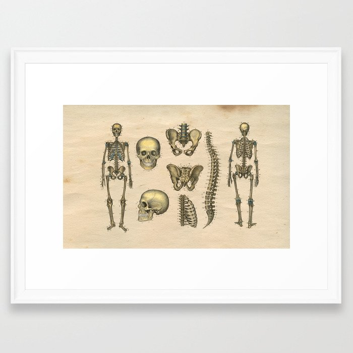 Human Skeleton Skull Spine Anatomy 1841 Print Framed Art Print by ...