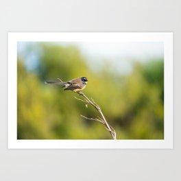 A Piwakawaka bird on a branch in Wellington, New Zealand Art Print