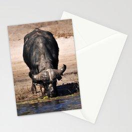 Cape Buffalo. Stationery Cards