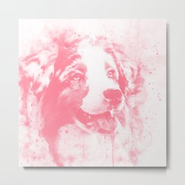 australian shepherd dog 2 wspw Metal Print