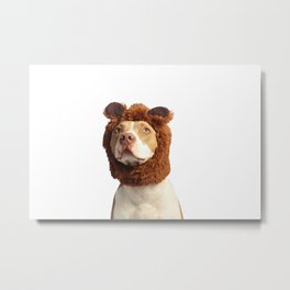 Bear Dog Metal Print