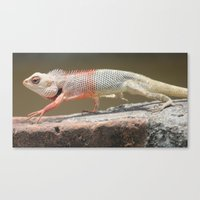 chameleon Canvas Prints featuring Chameleon  by Four Hands Art