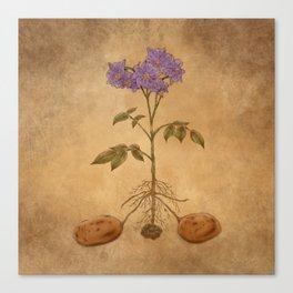 Anatomy of a Potato Plant Canvas Print