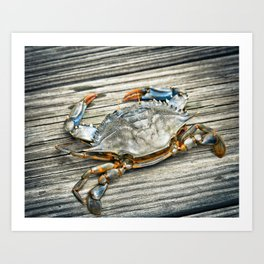 """Busted Peeler"" - Maryland Blue Crab Art Print"