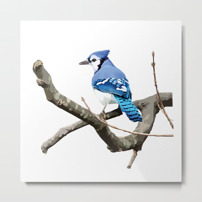 Blue Jay in Branches Metal Print