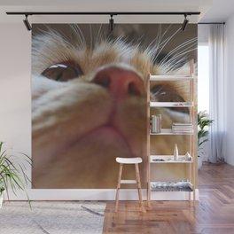 Funny Cute Cat Macro Eyes Wall Mural