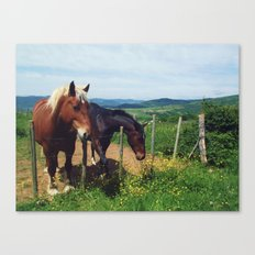 Horses in France #4 Canvas Print
