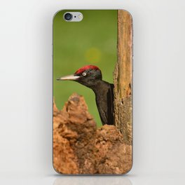Black woodpecker. iPhone Skin