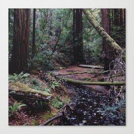Muir Woods, Marin County, CA Canvas Print