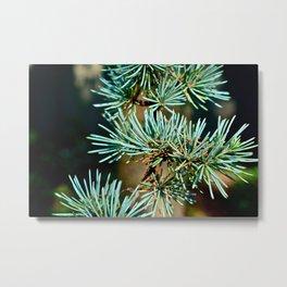 Blue Spruce Metal Print