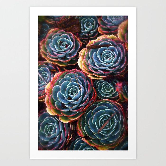 Colorful Cactus Rose Art Print