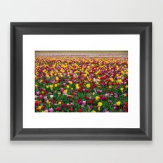 Fields of Color II, Woodburn Tulip Festival Framed Art Print