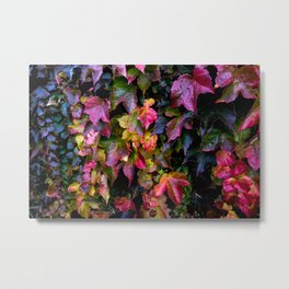 Boston Ivy Beauty Metal Print