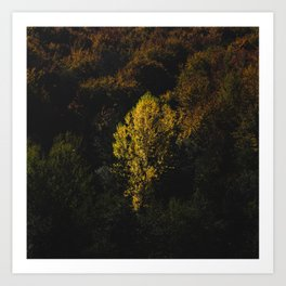 Yellow tree standing out from the crowd Art Print