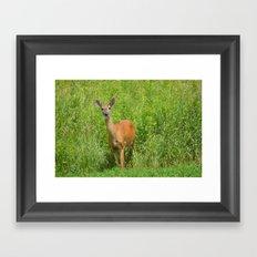 Deer on Edge of Field Framed Art Print