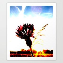 Centaurea flower Art Print