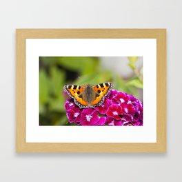 Butterfly small Tortoiseshell II Framed Art Print