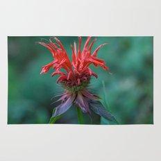 Scarlet Bee Balm {Monarda didyma L.} Rug