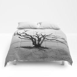 Botany Bay 2 Comforters