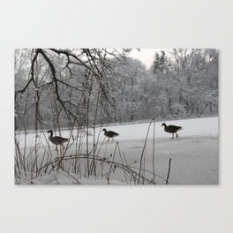 Nature and Animal(s) 2 Canvas Print