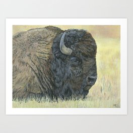 Buffalo Painting, Bison Art, Yellowstone Animal, Western Art Art Print