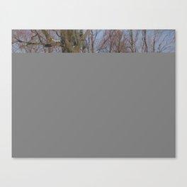 PARK AT WINTER TIME. SAINT PETERSBURG VIEW Canvas Print