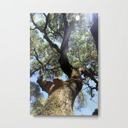 Tree at Jack London's Estate Metal Print