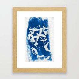 Herbal Sunprint #5 Framed Art Print