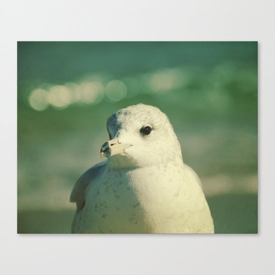 Seagull Close Up Canvas Print