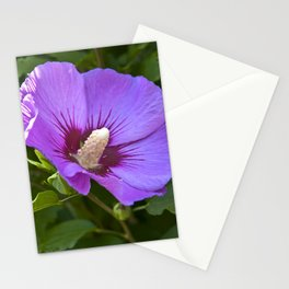Pink Floral Impression Stationery Cards